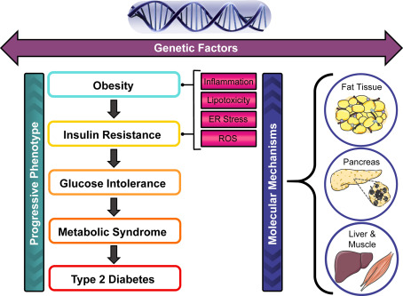 what is diet gene interactions