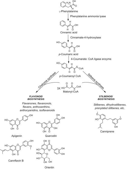 Phenylalanine Ammonia-Lyase - an overview | ScienceDirect Topics