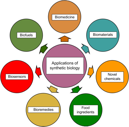 Synthetic Biology: Overview and Applications - ScienceDirect