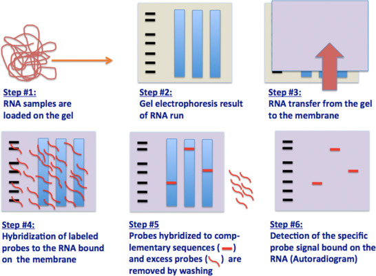 Techniques For Nucleic Acid Engineering The Foundation Of Gene