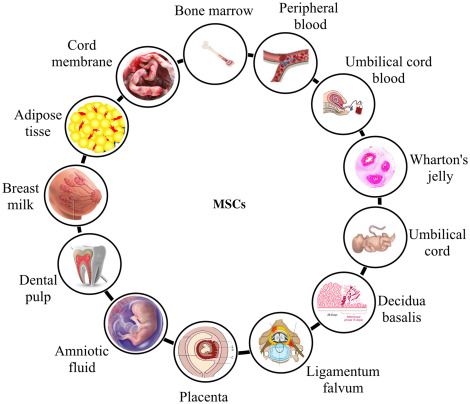 Medical Biotechnology: Techniques and Applications - ScienceDirect