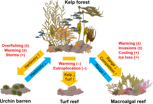 Status and Trends for the World\'s Kelp Forests - ScienceDirect
