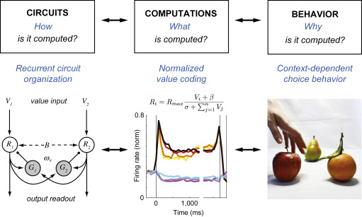 computational principles of value coding in the brain sciencedirect