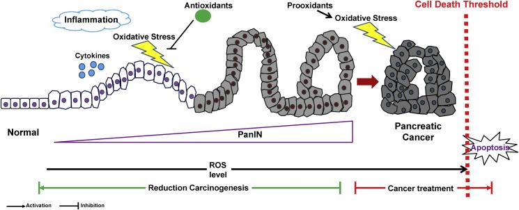pancreatic cancer from pancreatitis unguent din hpv în locuri intime