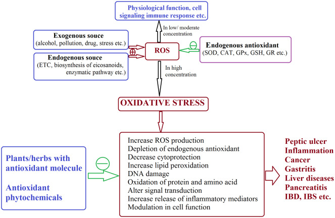 Herbs, Gastrointestinal Protection, and Oxidative Stress
