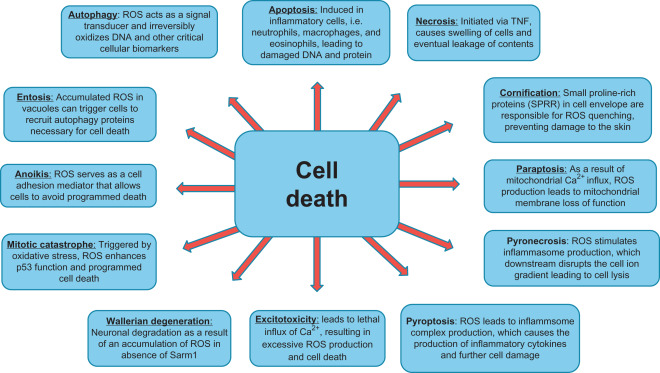 Reactive Oxygen Species, Oxidative Damage and Cell Death