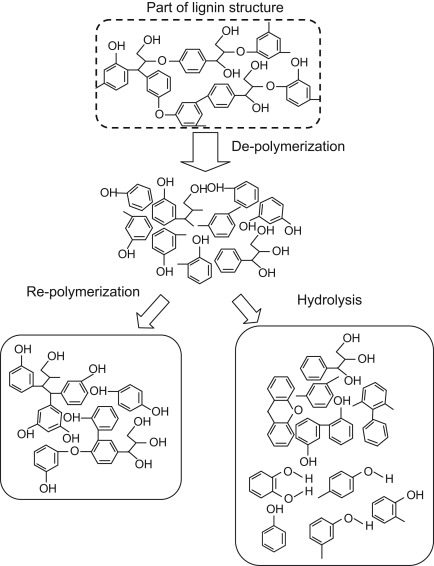 Hydrolysis Of Biopolymers In Near Critical And Subcritical Water