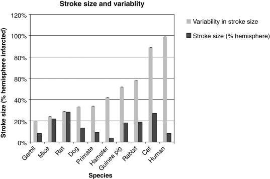 Animal Models of Ischemic Stroke Versus Clinical Stroke: Comparison