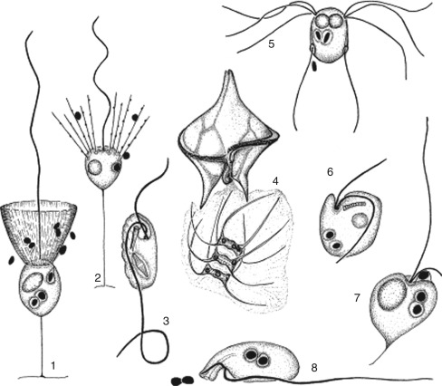 gonococcusok és trichomonák kutatása