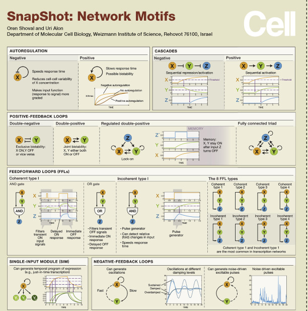 Network Motif - an overview | ScienceDirect Topics