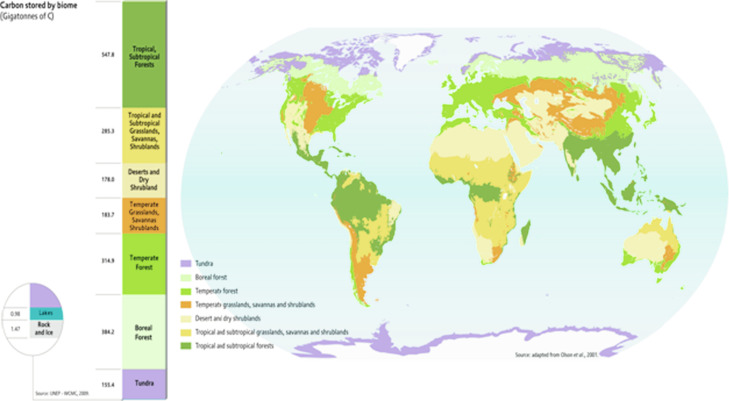 Carbon Sequestration - an overview   ScienceDirect Topics