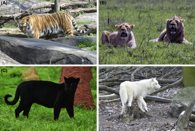 Understanding Humanwildlife Conflicts And Their Implications