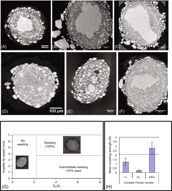 Microstructure and Mechanical Properties of Granules Formed