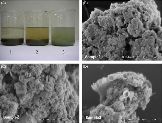 Digested Sludge - an overview | ScienceDirect Topics