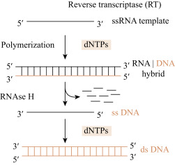 Reverse Transcriptase - an overview | ScienceDirect Topics