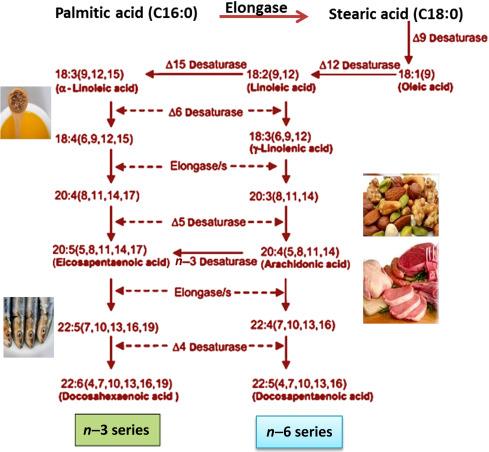 Microbial Biosynthesis of Health-Promoting Food Ingredients