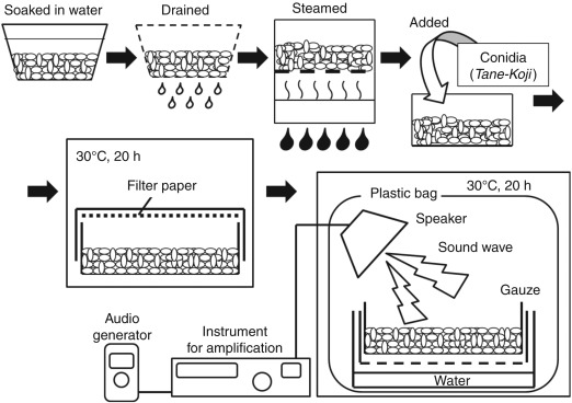 The Enzyme Production Control by Sound Waves in the Case of