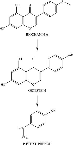 Biochanin A - an overview   ScienceDirect Topics