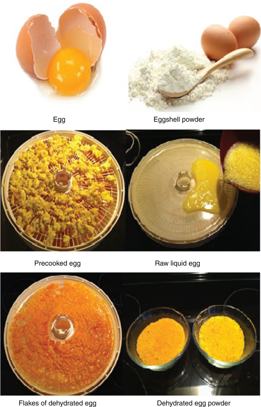 Food Materials Science in Egg Powder Industry - ScienceDirect