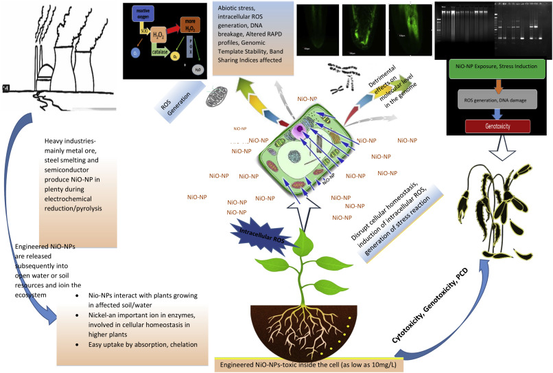 Physicochemical Perturbation of Plants on Exposure to Metal Oxide