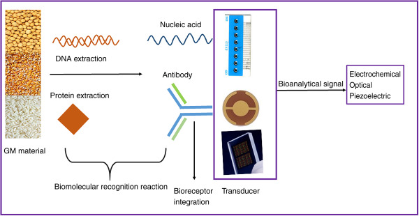 Biosensors as Advanced Device for the Transgenic Plants and Food and