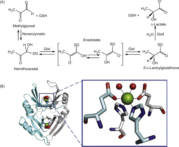 Glyceraldehyde 3-Phosphate - an overview | ScienceDirect Topics
