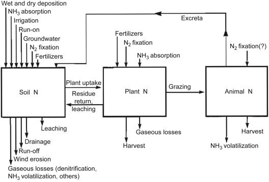 Nitrogen Dynamics In Grasslands Sciencedirect