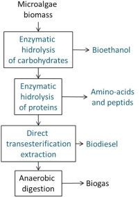Chemical Fertiliser - an overview   ScienceDirect Topics