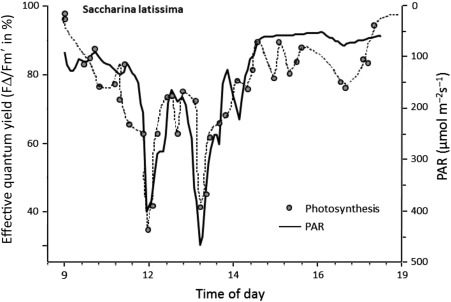 Photosynthesis Assessed By Chlorophyll Fluorescence Sciencedirect