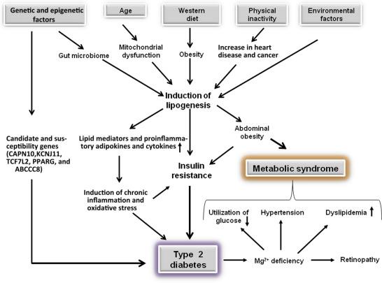 risk factors of mediterranean diet sciencedirect