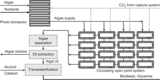Algal Cultivation - an overview | ScienceDirect Topics