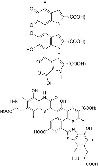 Medicinal Plants as Alternative Treatments for Progressive Macular