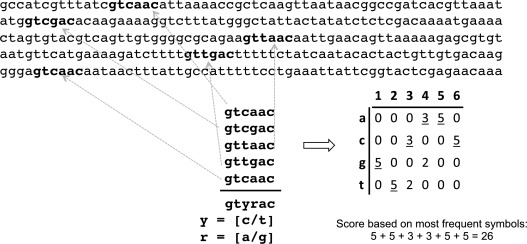 Regular Expression - an overview | ScienceDirect Topics