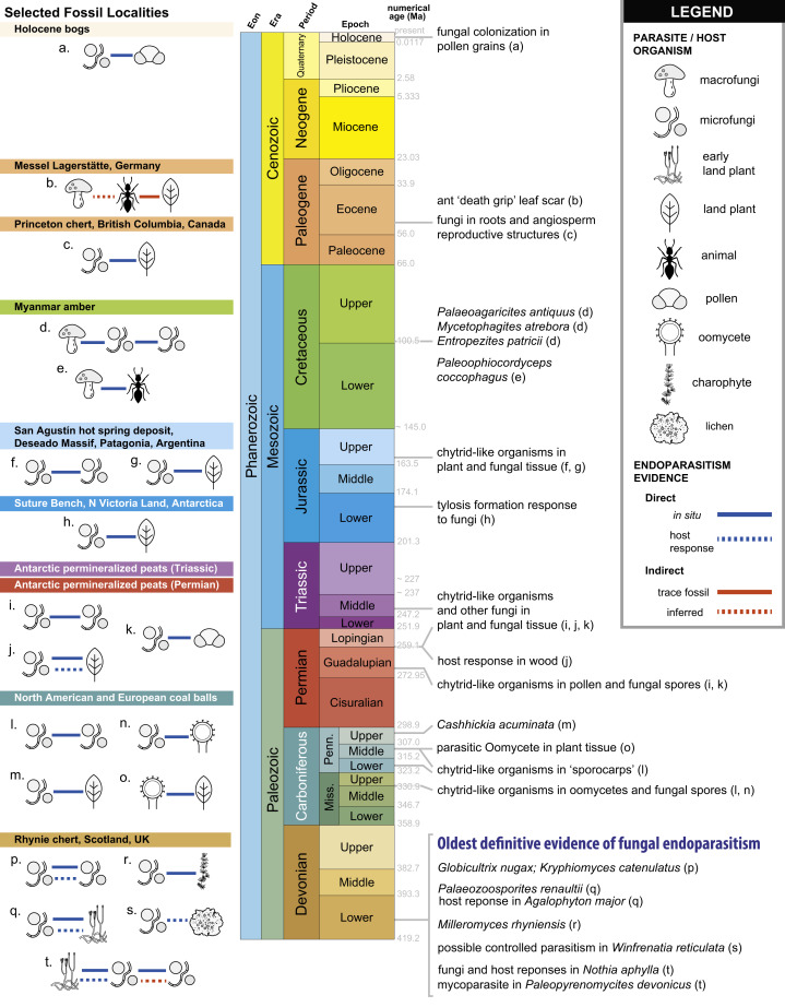 Reactive Oxygen Defense Against Cellular Endoparasites And
