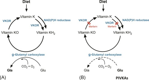 Methods for assessment of Vitamin K - ScienceDirect