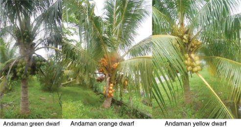 Coconut Biodiversity – Nature's Gift to the Tropical Islands