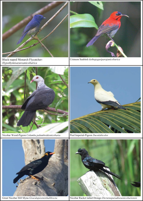 Avian Diversity of Bay Island and Its Assessment Tools - ScienceDirect