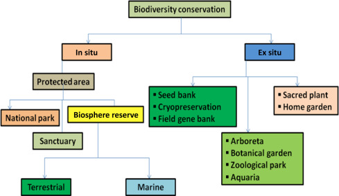 Biodiversity Conservation: Issues and Strategies for the Tropical Islands -  ScienceDirect
