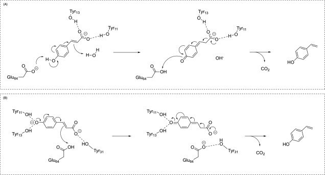 Enzymatic Decarboxylation As A Tool For The Enzymatic