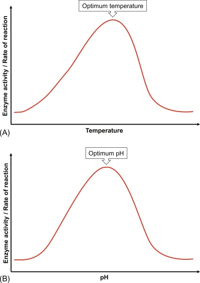 Enzyme Activity - an overview | ScienceDirect TopicsScienceDirect.com