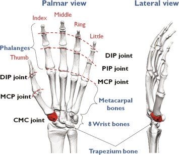 Approaching Human Hand Dexterity Through Highly Biomimetic Design ...