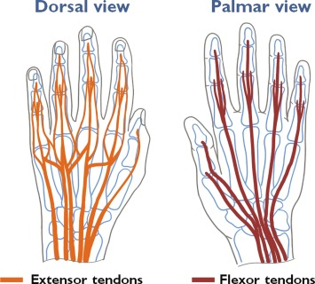 Approaching Human Hand Dexterity Through Highly Biomimetic