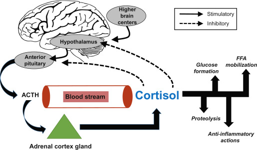 How Do Various Cortisol Levels Impact >> Cortisol An Overview Sciencedirect Topics