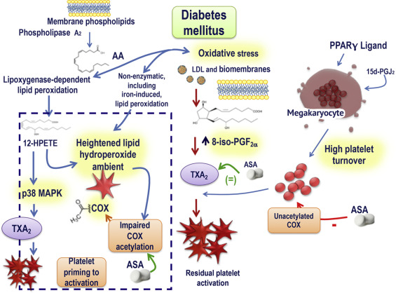 The Role of Platelets in Diabetes Mellitus - ScienceDirect
