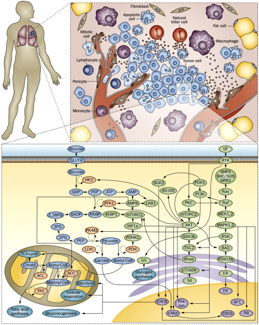 Novel diagnostic techniques: Genomic, proteomic and systems biology