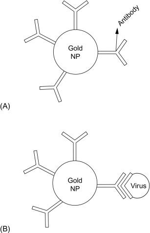 Biosensor - an overview | ScienceDirect Topics