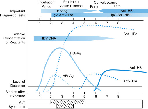 HBsAg - an overview | ScienceDirect Topics