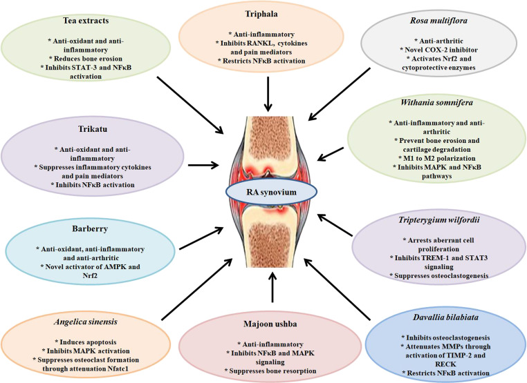 Herbal Formulations and Their Bioactive Components as Dietary
