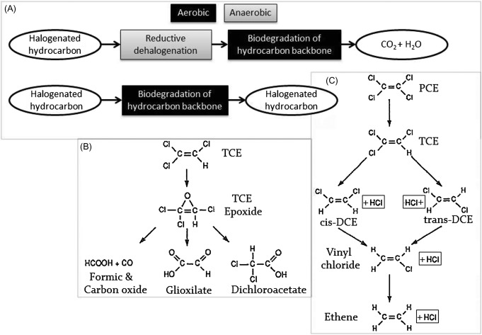Halogenated Hydrocarbon An Overview Sciencedirect Topics