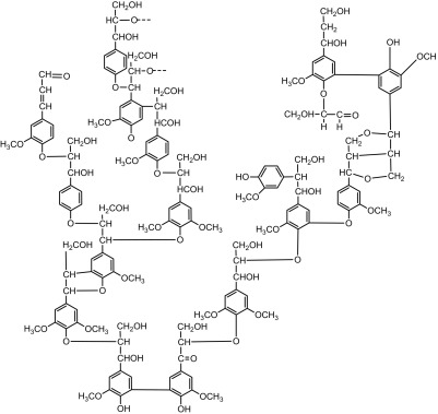 Structure And Characteristics Of Lignin